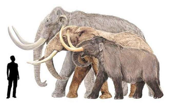 About Mammoths - 33.3KB